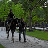 Always Dreaming returns from his morning exercise with his exercise rider Nick Bush two days before the Preakness Stakes at Pimlico Race Course Thursday May 18, 2017 in Baltimore, Maryland.  Photo by Skip Dickstein