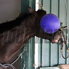 Always Dreaming Jolly Ball Preakness Chad B. Harmon