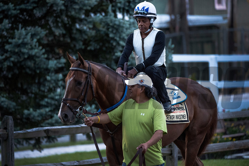 Senior Investment goes out for his morning exercise two days before the Preakness Stakes at Pimlico Race Course Thursday May 18, 2017 in Baltimore, Maryland.  Photo by Skip Dickstein