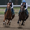 Hofburg with exercise rider Neil Poznansky aboard, left, gets his final tune up work in tandem with Good Samaritan with exercise rider Juan Quintero for the 150th Belmont Stakes June 1, 2018 at the Oklahoma Training Center in Saratoga Springs, N.Y. Photo: Skip Dickstein