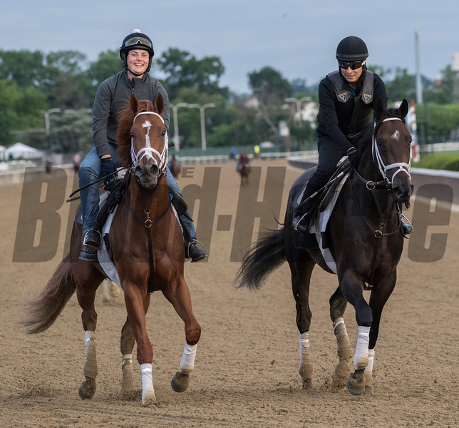 Vino Rosso and Noble Indy at Belmont 6/6/18.  Photo by Skip Dickstein