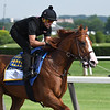 Justify - Belmont Park, June 8, 2018<br /> Coglianese Photos/Robert Mauhar