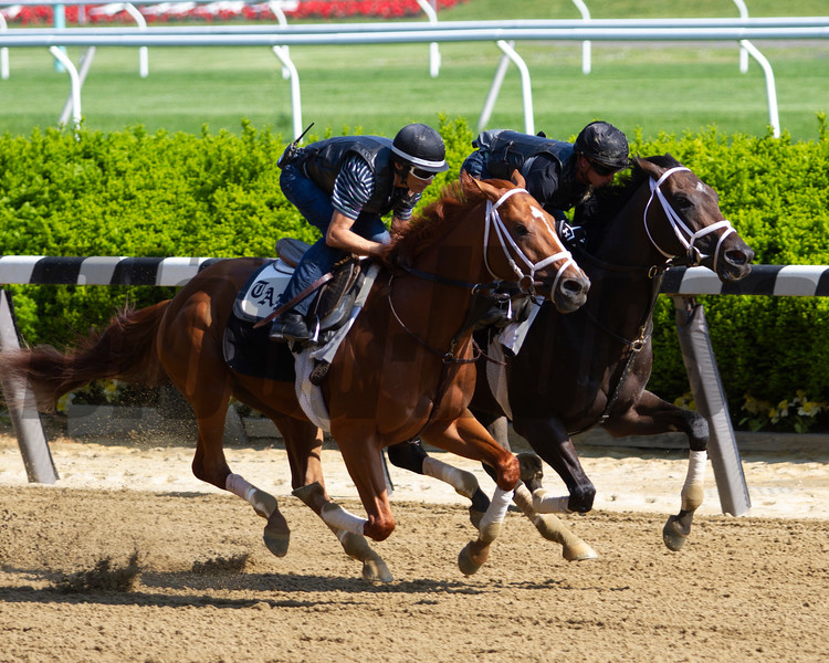 Vino Rosso works at Belmont Park on May 25, 2018<br /> Coglianese Photos/Brittlan Wall