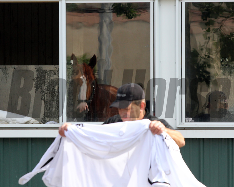 Justify reflection Belmont Park Chad B. Harmon