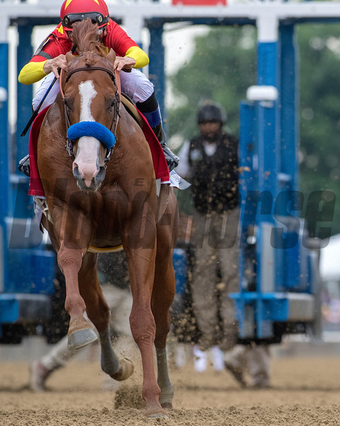 Justify; Mike Smith; Belmont Stakes presented by NYRA Bets; G1; Belmont Park; June 9; 2018. Photo: Mathea Kelley