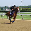 Justify - Belmont Park, June 8, 2018<br /> Coglianese Photos/Viola Jasko