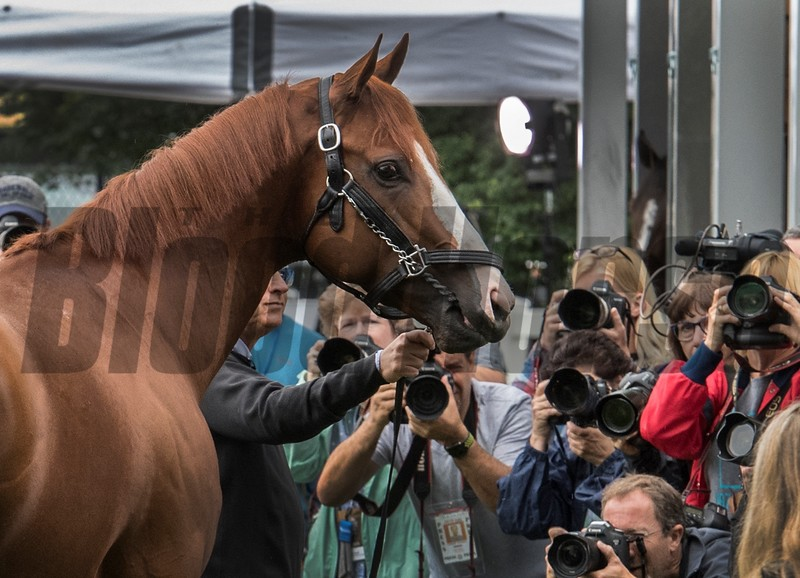 Justify - Morning - Belmont Park - 06-10-18 Photo: Skip Dickstein