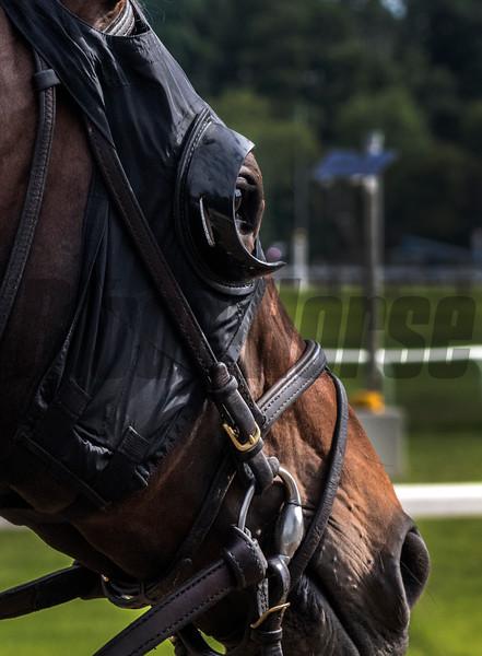 Gronkowski at Belmont 6/6/18.  Photo by Skip Dickstein