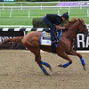 Justify - Belmont Park, June 7, 2018<br /> Coglianese Photos