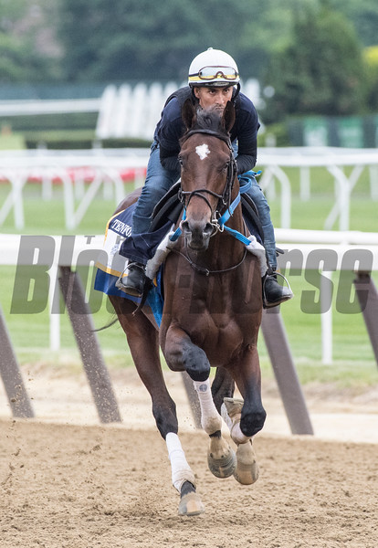 Tenfold at Belmont Race Course Thursday June 7, 2018 in Elmont, N.Y. Photo by Skip Dickstein