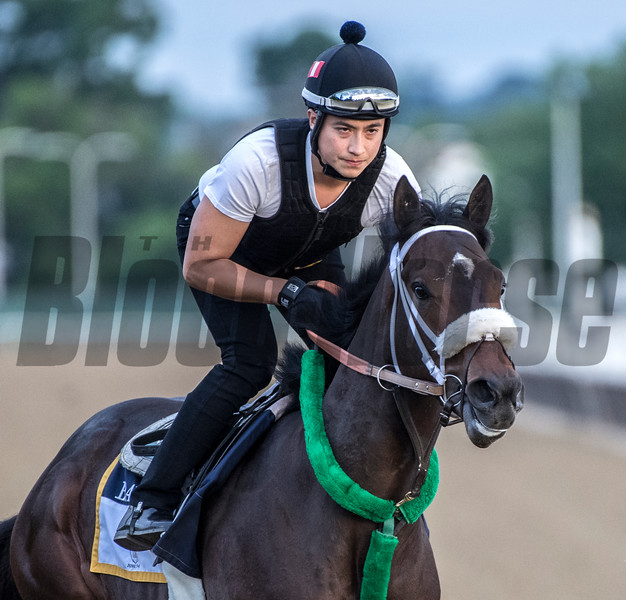 Bravazo at Belmont 6/6/18.  Photo by Skip Dickstein