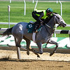 My Miss Lilly - Belmont Park, May 25, 2018<br /> Coglianese Photos