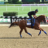 Justify - Belmont Park, June 8, 2018<br /> Coglianese Photos/Adam Coglianese