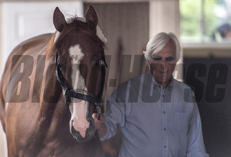 Justify takes a look around in the hands of trainer Bob Baffert after arriving from Louisville for his appearance in his attempt at a Triple Crown in Saturday's 150th Belmont Stakes Wednesday June 6, 2018 in Elmont, N.Y.  Photo by Skip Dickstein
