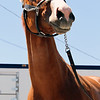 Justify Churchill Downs Kentucky Derby Chad B. Harmon