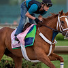 HEAVENHASMYNIKKI training at Churchill Downs