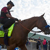 Kentucy Derby contender Solomini working in the morning of May 2, 2018.