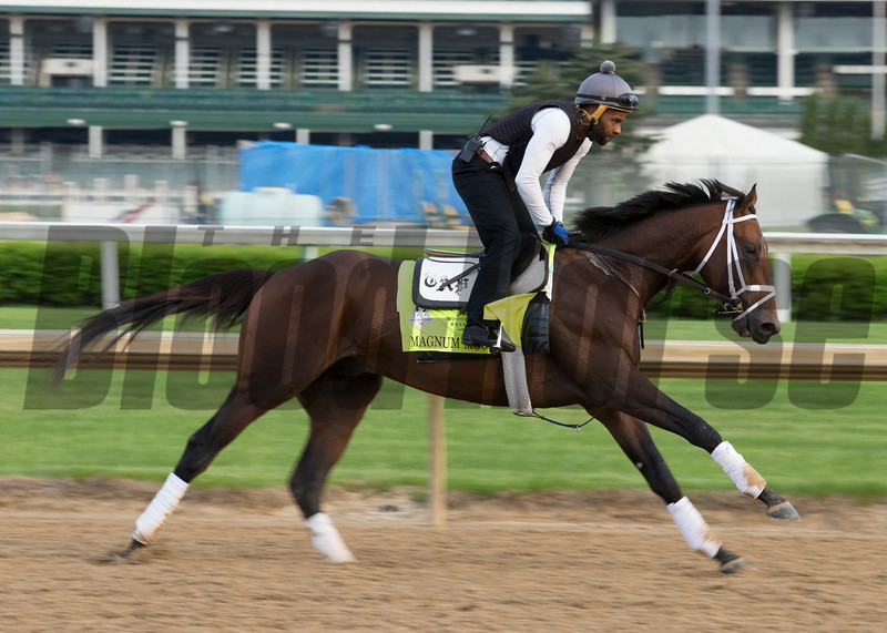 Kentucy Derby contender Magnum Moon in the morning of May 2, 2018.