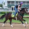 Kentucy Derby contender Bravazo working in the morning of May 2, 2018 at Churchill Downs.