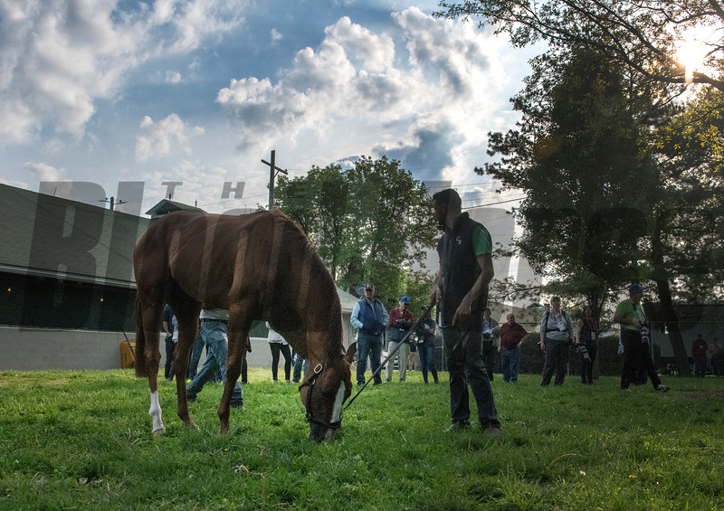 Good Magic grazes at Churchill Downs Wednesday May 2, 2018. Photo by Skip Dickstein