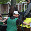 KY Derby entrant Bolt D'Oro schools in the gate Wednesday May 2, 2018. Photo by Skip Dickstein