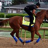 Justify 2018 Kentucky Derby Week<br /> Dave Harmon Photo