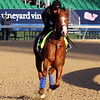 Justify Kentucky Derby Churchill Downs Chad B. Harmon