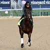 Bolt d'Oro Kentucky Derby Chad B. Harmon