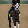 Noble Indy training at Churchill Downs
