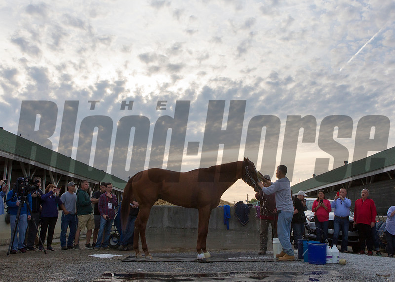 Kentucky Derby contender Justify getting a bath in the morning of May 2, 2018.