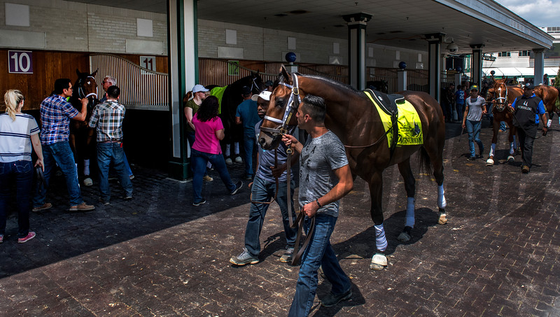 All of trainer Todd Pletcher's Derby entrants school in the paddock at Churchill Downs Wednesday May 2, 2018. Photo by Skip Dickstein
