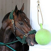 Bolt d'Oro Churchill Downs Chad B. Harmon
