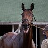ABEL TASMAN in the morning at Churchill Downs