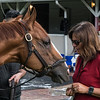 Good Magic gets some mints from owner Barbara Banke at Churchill Downs Wednesday May 2, 2018. Photo by Skip Dickstein