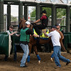 Solomini schools at the gate at Churchill Downs Wednesday May 2, 2018. Photo by Skip Dickstein