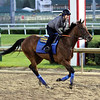 Abel Tasman Churchill Downs Chad B. Harmon