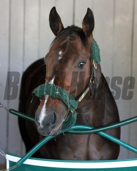 Bolt d'Oro Churchill Downs Kentucky Derby Chad B. Harmon