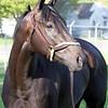 Instilled Regard Kentucky Derby Chad B. Harmon