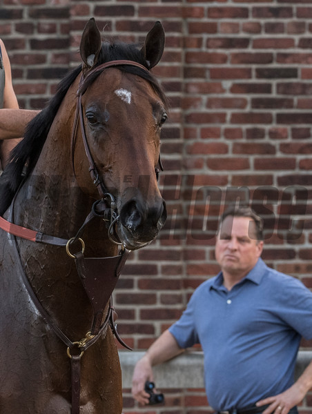 Tom Amos with his KY Derby entrant Lone Sailor before schooling in the gate Wednesday May 2, 2018. Photo by Skip Dickstein
