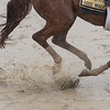 Good Magis out for his morning exercise  at Pimlico Race Course in preparation for Saturday's Preakness Stakes Thursday May 17, 2018 in Baltimore, MD.  Photo by Skip Dickstein