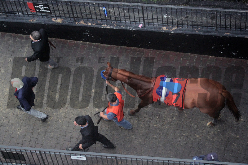 Justify from above Preakness Chad B. Harmon