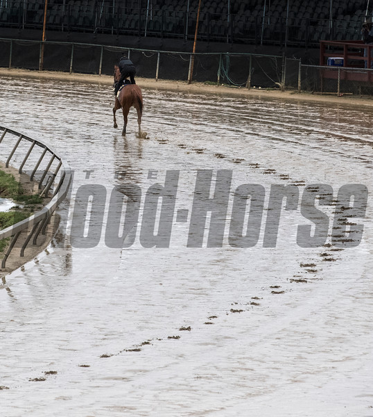 Kentucky Derby winner Justify gallops in the mud at Pimlico Race Course in preparation for Saturday's Preakness Stakes Thursday May 17, 2018 in Baltimore, MD.  Photo by Skip Dickstein