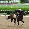 War of Will - Belmont Park, June 5, 2019<br /> Coglianese Photos