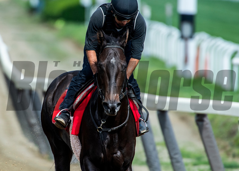 Serengeti Empress on the main track for training Thursday June 6, 2019 at Belmont Park in Elmont, N.Y.  Photo by Skip Dickstein