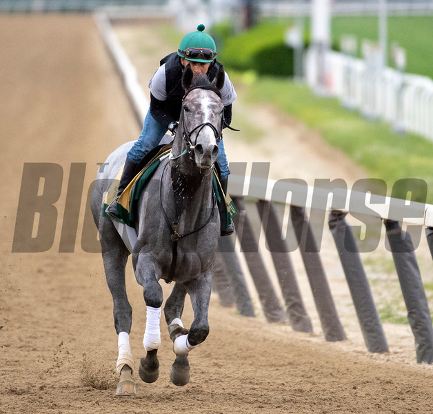 Tacitus on track at the Belmont Race Course Wednesday June 5, 2019 in Elmont, N.Y. Photo by Skip Dickstein