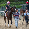 Trainer Mark Casse, far right.  walks with War of Will with exercise rider Kim Carroll at the Belmont Race Course Wednesday June 5, 2019 in Elmont, N.Y. Photo by Skip Dickstein