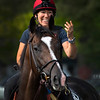 Belmont entrant Everfast with assistant trainer Tammy Fox in the irons heads to the main track for training Thursday June 6, 2019 at Belmont Park in Elmont, N.Y.  Photo by Skip Dickstein