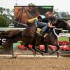 Tax - Belmont Park, June 1, 2019<br /> Coglianese Photos/Janet Garaguso