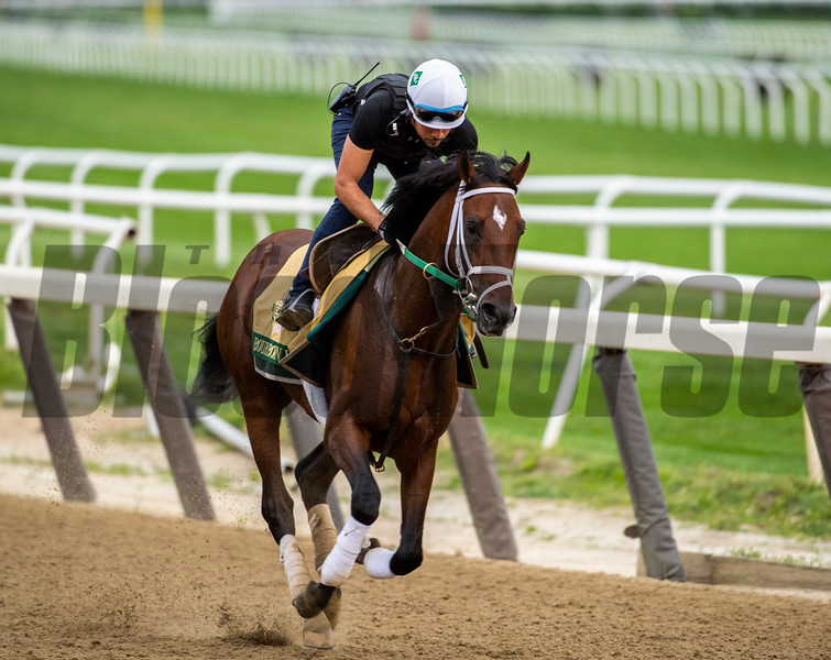 Bourbon War on track at the Belmont Race Course Wednesday June 5, 2019 in Elmont, N.Y. Photo by Skip Dickstein