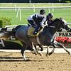 Tacitus - Morning - Belmont Park - 052619. Photo: Coglianese Photos/Elsa Lorieul